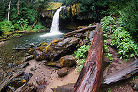 Iron Creek Falls, Gifford Pinchot National Forest, Washington, US