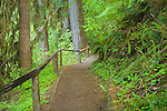 Olympic National Park, WA     <br /> Path and fence along the Hall of Mosses trail