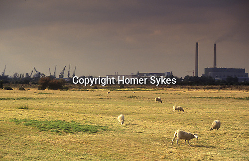 Swanscombe Peninsula North Kent Borough of Dartford UK. 1990s. poor farming land.  Thames Estuary cranes and riverside industry in background.