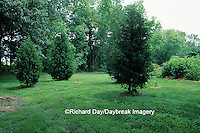 63808-02219 Yard landscaped for birds Eastern Red Cedars (Juniperus virginiana), Canopy trees, bushes & flowers IL