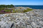 Rocks and Heather along the Baltic Sea Coast on the Island of Kökar