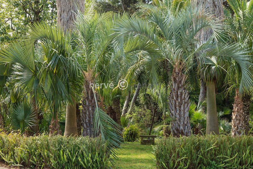 France, Alpes-Maritimes (06), Saint-Jean-Cap-Ferrat, le jardin botanique des C&egrave;dres:<br /> la palmeraie.