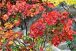 Fall landscape, Japan
