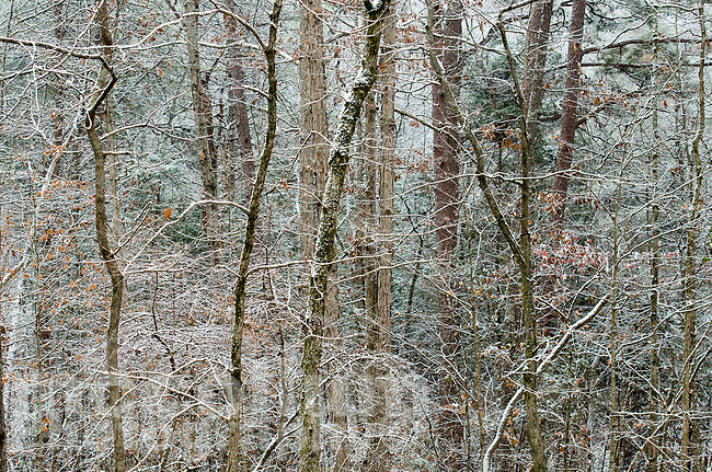 Michael McCollum<br /> 12/8/17<br /> Early Snow leaves, South Knoxville Tennessee