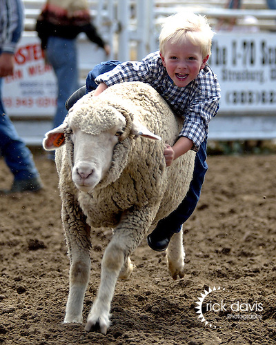 Four year old cowboy Evan Maypole of Westminster, Colorado is all smiles as he competes in his first muttin bustin event at the Deer Trail, Colorado CPRA Rodeo on August 20, 2006. Youngsters firmly grasp the sheep and take a wild ride across the arena in a quest to win the coveted championship trophy. Evan showed no fear during his ride and wound up taking home the trophy.
