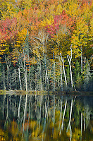 Autumn color along the shore of Red Jack Lake is reflected in its waters, Hiawatha National Forest, Alger County, Michigan