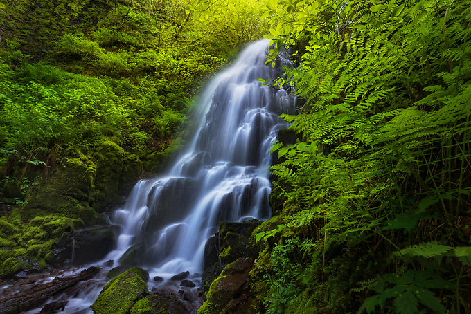A gem of the Columbia River Gorge, Fairy Falls is framed by ferns and foliage in the early days of spring.<br /> <br /> ARTIST CHOICE: 30x45 Lumachrome/Acylic