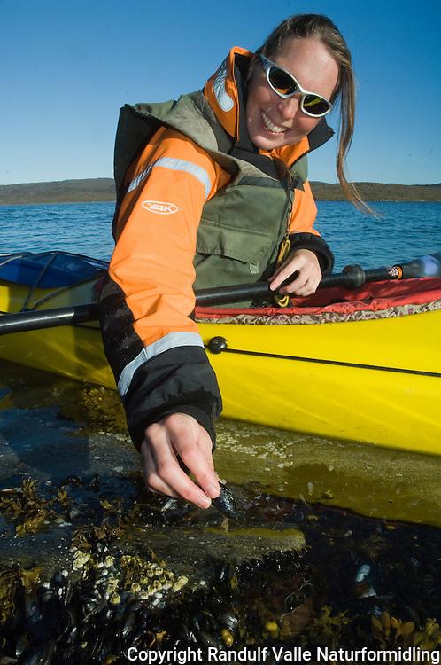 Jente plukker blåskjell fra kajakk ---- Girl picking mussels from kayak