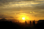 Cowboys walk back to camp at sunrise after feeding the livestock during the annual Reno Rodeo cattle drive which brings the livestock for use in the rodeo into town.