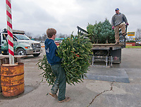 Mark Reiner of Oakland Nursery loads one of about 20 leftover Christmas trees onto a truck to take to the recycling pile at Kurtz Brothers on Westerville Road. The trees came from the company's sales lot at Glengary Shopping Center that opened the day after Thanksgiving.