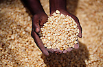"A farmer holds corn provided by the ACT Alliance in Chidyamanga, a village in southern Malawi that has been hard hit by drought in recent years, leading to chronic food insecurity, especially during the ""hunger season,"" when farmers are waiting for the harvest. The ACT Alliance is working with farmers in this village to switch to alternative, drought-resistant crops, as well as using irrigation and other improved techniques to increase agricultural yields."