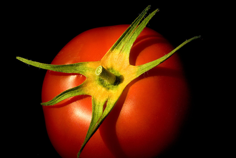 Tomato with yellow sepals.