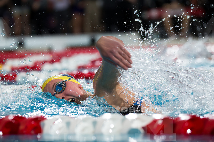 Michigan Women's swimming during day 2 finals of the Big Ten Championships in Columbus, Ohio on February 19, 2015.