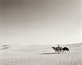 SAUDI ARABIA, Najran, man rides with his camels through The Empty Quarter (B&W)