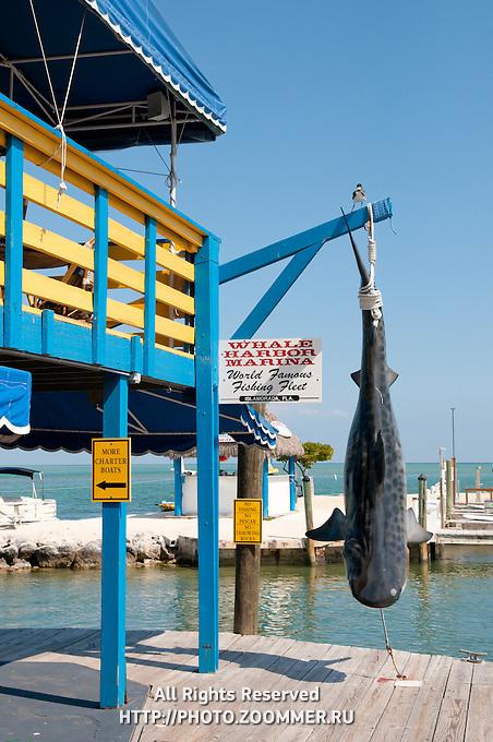 Upper deck of Whale harbor restaurant Wahoo's