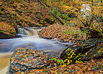 Ricketts Glen State Park, PA: Kitchen Creek flowing through leaf covered bolders in autumn