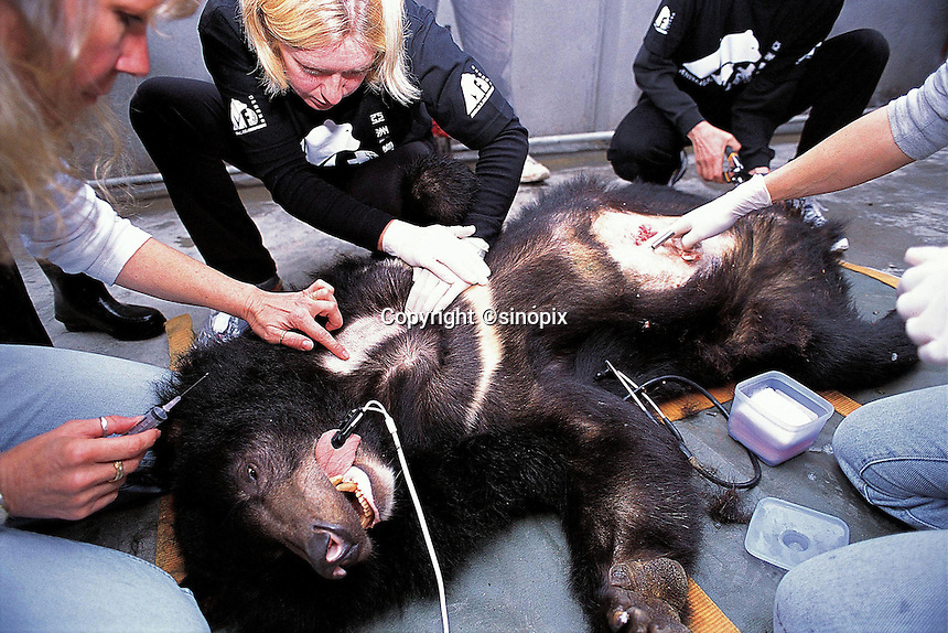 Animals Asia's Bear rescue programme in Chengdu, China.