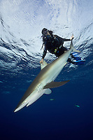 TH5292-D. Silky Shark (Carcharhinus falciformis) in a relaxed trance-like state called tonic immobility. Scuba diver (model released) gently holds the 6 foot long shark for a few moments before releasing it to swim off into the blue. Cuba, Caribbean Sea.<br /> Photo Copyright &copy; Brandon Cole. All rights reserved worldwide.  www.brandoncole.com