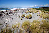 Driftwood litter the Haast Beach, Westland District, West Coast, South Island, New Zealand.