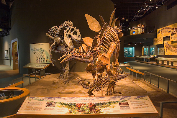 Dinosaur skeleton display, Denver, Colorado, USA John offers private photo tours of Denver, Boulder and Rocky Mountain National Park. .  John offers private photo tours in Denver, Boulder and throughout Colorado. Year-round.