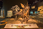 Dinosaur skeleton display, Denver, Colorado, USA John offers private photo tours of Denver, Boulder and Rocky Mountain National Park. .  John offers private photo tours in Denver, Boulder and throughout Colorado. Year-round.