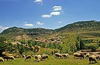 Spain. Castile. Shepherd, sheep and village in the Jucar Valley near Cuenca..
