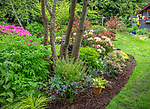 Vashon-Maury Island, WA: Spring garden bed with blooming rhododendrons, hellobores, hostas, ferns and Japanese forest grasses.