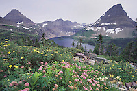 Wildflowers and Hidden Lake,Shrubby Cinquefoil,Yellow Columbine,White Spiraea, Glacier National Park, Montana, USA