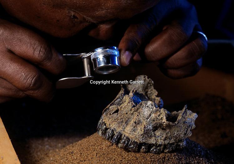 olduvai gorge; 0h62; fossil; mandible; H. erectus; Fidelis Masao;