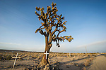 Roadside memorial at a joshua tree along old SR 58 west of Boron, Calif.