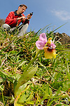 A botanist surveying Orchids (Ophrys tenthredinifera) by taking GPS coordinates, Sicily, Italy