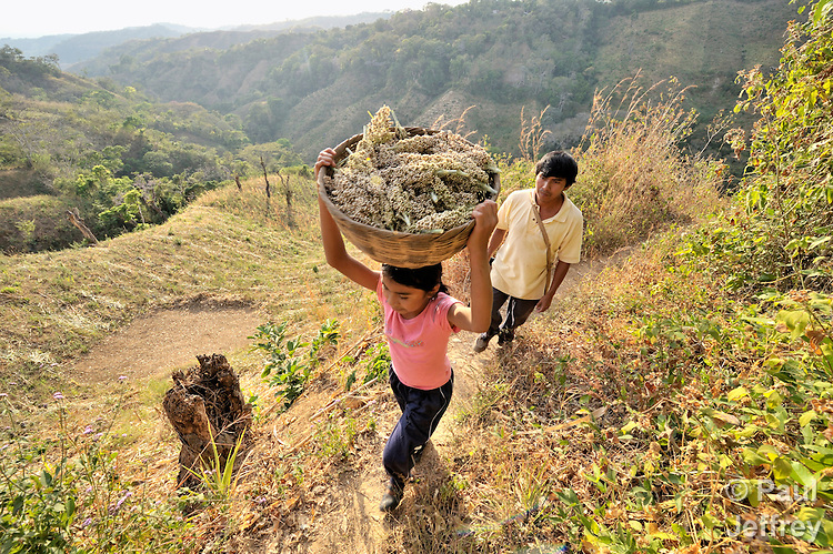 On his hillside farm outside Santa Catarina Masahuat, El Salvador, Cesar Donald Ascensio Reyes, carries home his crop with assistance from his daughter Roxana.