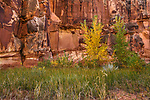 Rock Wall and Autumn Colors at Capitol Reef National Park, Utah, USA