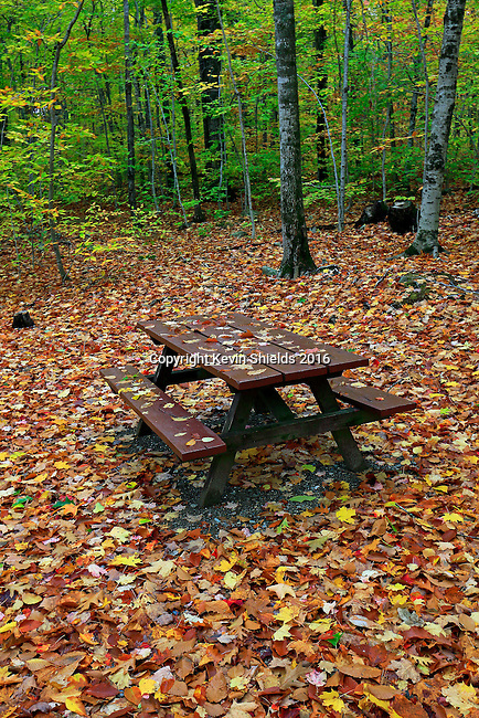Campsite in the Fall, Camden Hills State Park, Camden, Maine, USA
