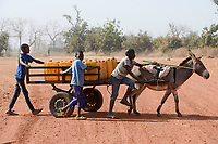 MALI, Kayes, Sadiola, children transport water in jerry cans on donkey cart /Kinder transportieren Wasser mit Eselskarren