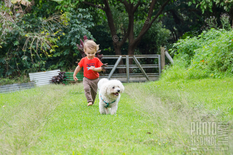 A young part-Asian local boy and a white bichon poodle dog playing outside run down a grass-covered driveway, Big Island.