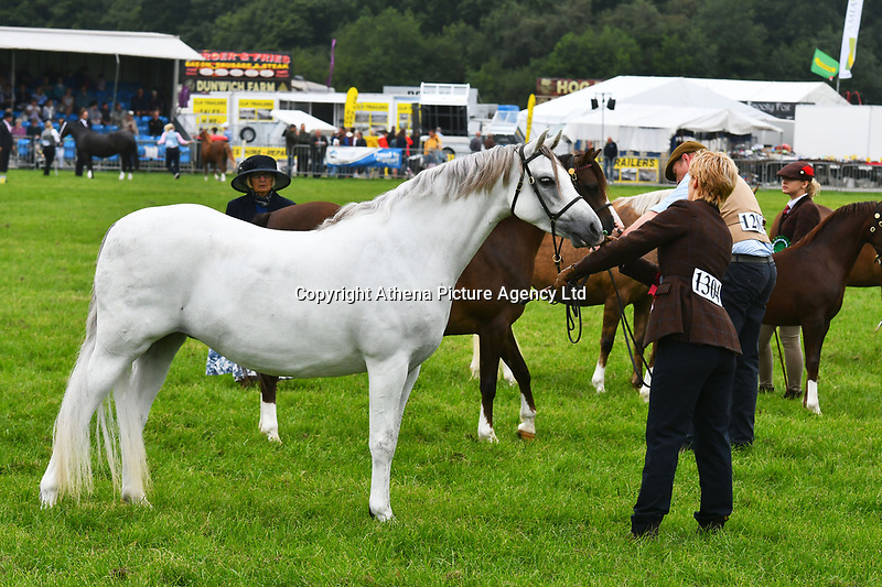 COPY BY TOM BEDFORD<br /> Pictured: Judging in the ring at the Pembrokeshire Show during the first day of the event. Tuesday 14 August 2018<br /> Re: Six people have been injured when a horse bolted during the Pembrokeshire County Show in west Wales, UK.<br /> The horse broke loose from a show ring onto the main thoroughfare during the show in Withybush, near Haverfordwest and knocked several people over.<br /> The Air Ambulance attended the scene along with police and ambulances.<br /> Parts of the showground were closed off as a result of the incidentand the horse has since been captured.