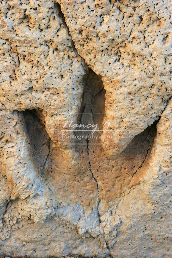 The footprint of a dinosaur in the mudflats of Glen Rose Texas solidified in the sediment rock