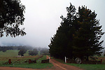 Misty Lane, Wauchope Rural