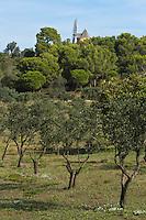 Europe/Provence-Alpes-Côte d'Azur/83/Var/Iles d'Hyères/Ile de Porquerolles:  Oliviers du Conservatoire botanique national méditerranéen de Porquerolles, plus de 110 variétés d'oliviers, sur l'île de Porquerolles et  le Moulin du Bonheur sur Porquerolles, vieux moulin à vent provençal datant du XVIIIème siècle.