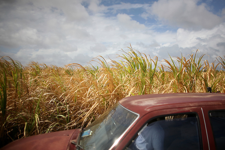A car passes a sugar field in Barbados on Saturday, April 10, 2010.
