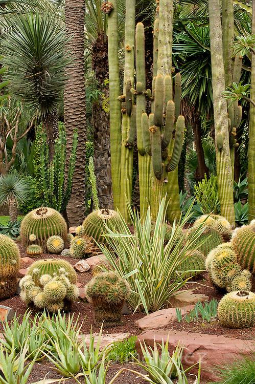 Cactus garden in  El Huerto del Cura palm grove. Elche, Alicante, Costa Blanca, Spain, Europe.
