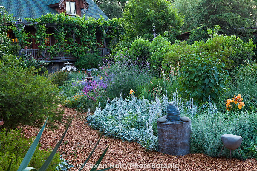 Bee friendly mixed perennial borders with silver foliage Stachys and mulched paths in front of Frey home with table grape festooned porch