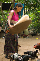 A woman separating rice while the chickens take the opportunity to get any left overs that might fall to the ground.