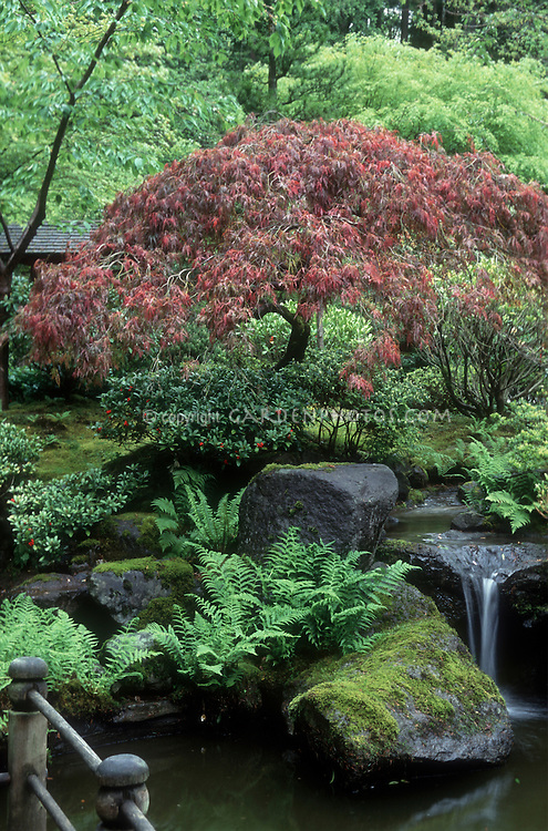 Spring Garden with Japanese maple, waterfall, ferns, for lovely meditation retreat