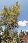Israel, Sharon region. Havat Hanoi garden