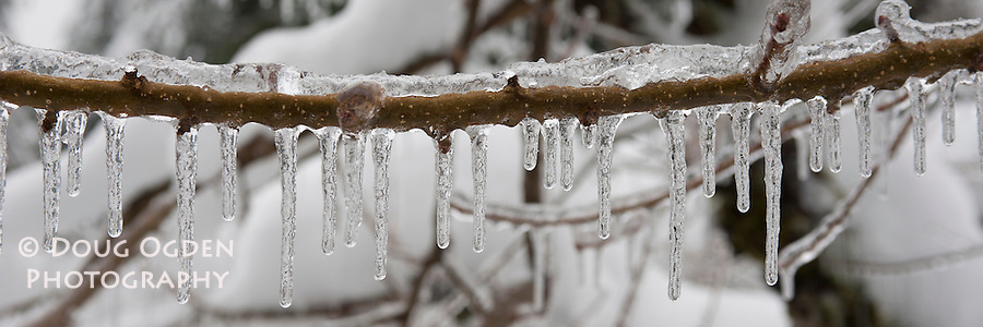 Ice on twig