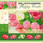 Isabella, EASTER, OSTERN, PASCUA, photos+++++,ITKE161416-BSTRWSK,#e# easter tulips