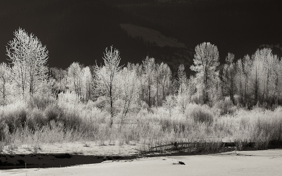 Hoarfrost covers the vegetation near the edge of a small river in Montana.