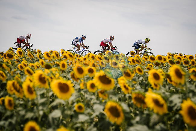 The breakaway, featuring Stephane Rossetto and Anthony Perez (FRA) Cofidis, Aime De Gendt (BEL) Wanty-Gobert and local Albi man Lilian Calmejane (FRA) Total Direct Energie, race by the sunflower fields during Stage 11 of the 2019 Tour de France running 167km from Albi to Toulouse, France. 17th July 2019.<br /> Picture: ASO/Pauline Ballet   Cyclefile<br /> All photos usage must carry mandatory copyright credit (© Cyclefile   ASO/Pauline Ballet)